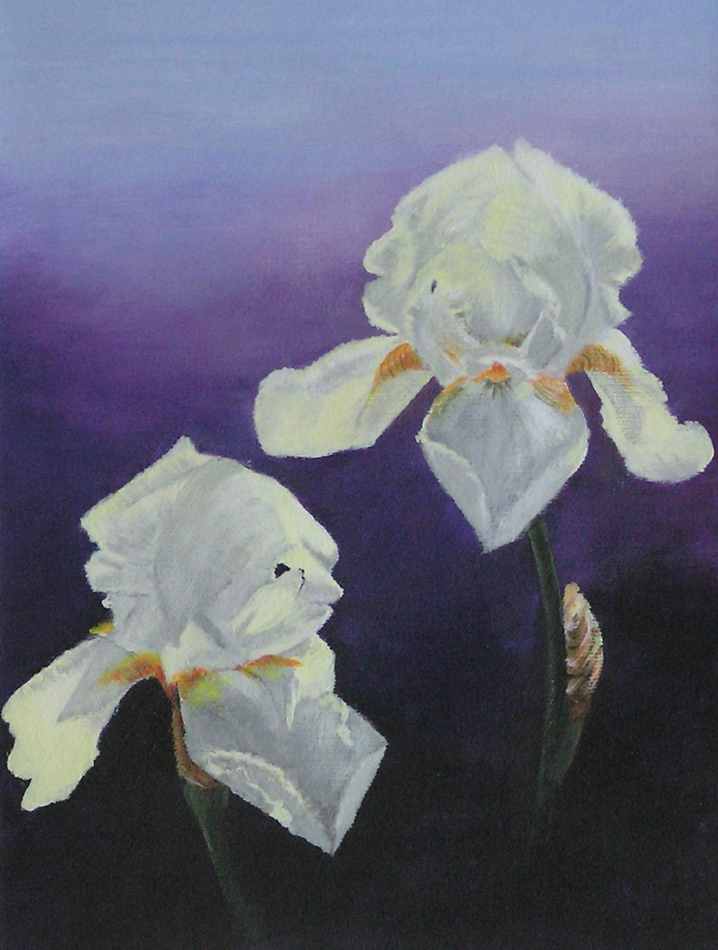 Lilien im Licht II (40 x 50)