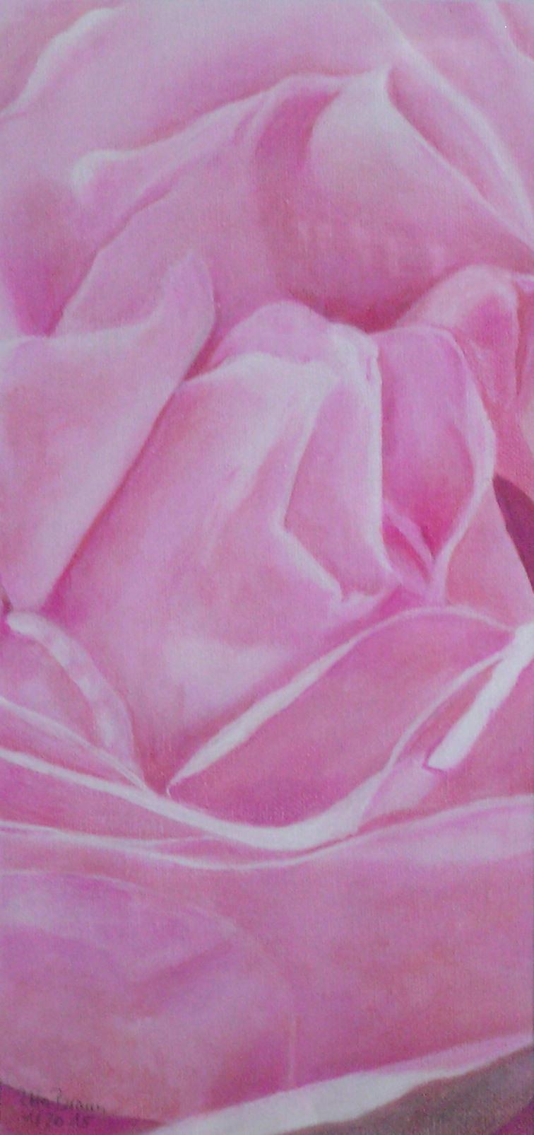 Blütenstruktur rosé- Septemberrose