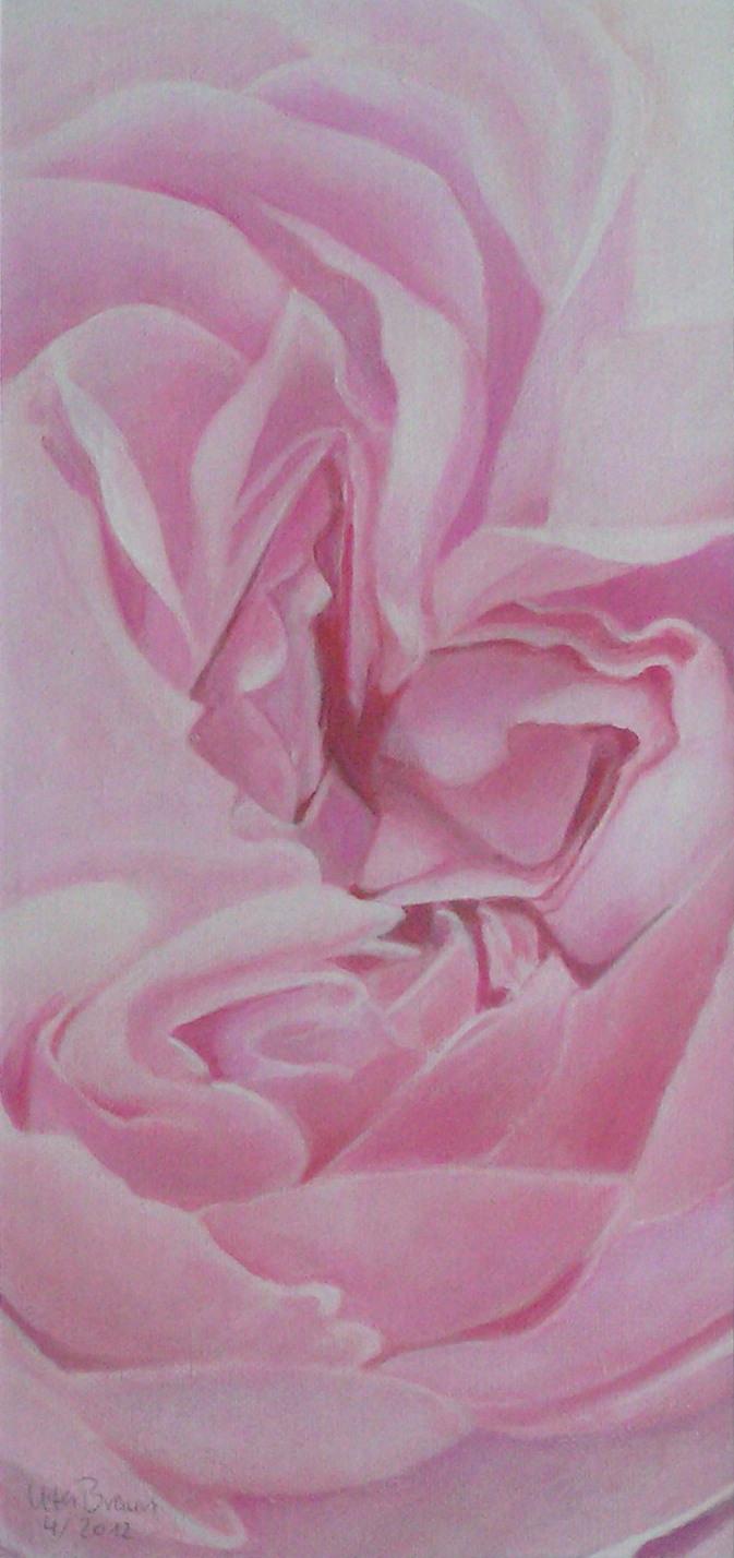 Blütenstruktur rosé- Novemberrose (17 x 36)