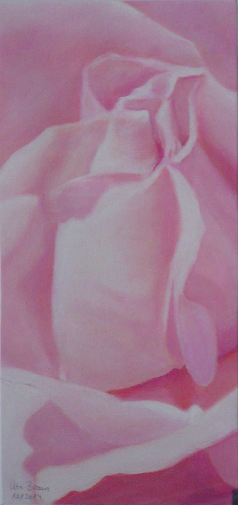 Blütenstruktur rosé- Julirose