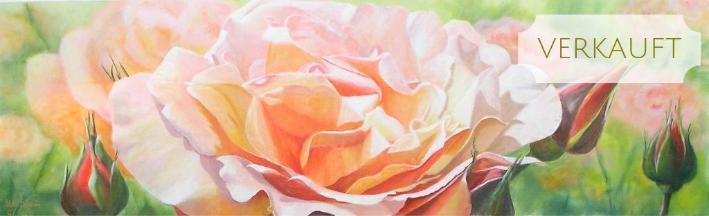 Rosenportrait apricot