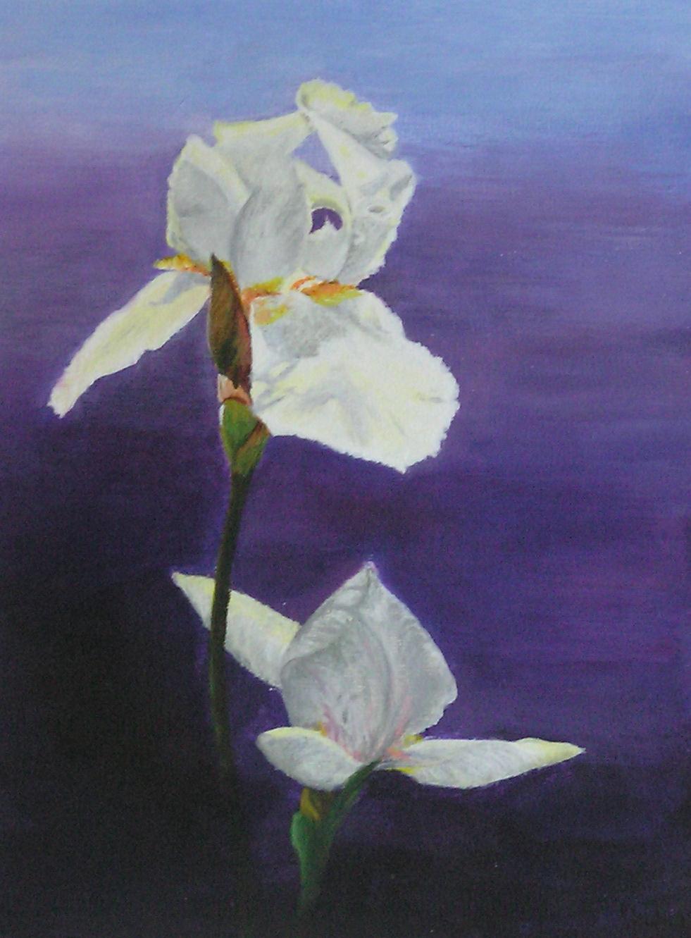 Lilien im Licht I (40 x 50)