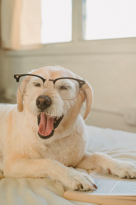 l'intelligence du chien