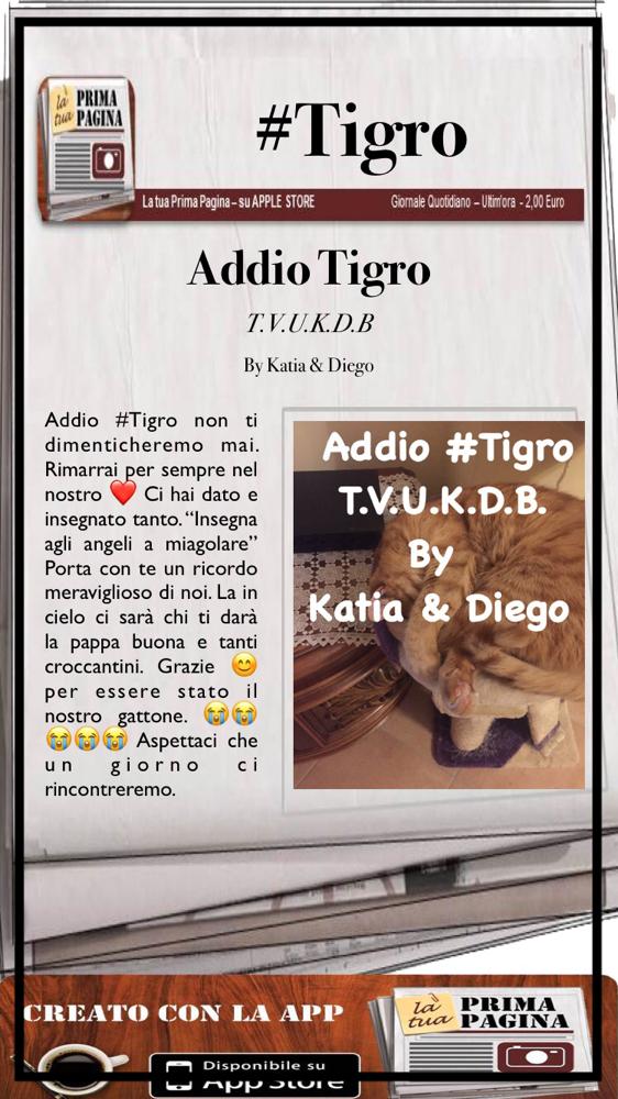 R.I.P #Tigro 😭😭😭😭🐈🐈🐈🐈❤️💔❤️💔❤️