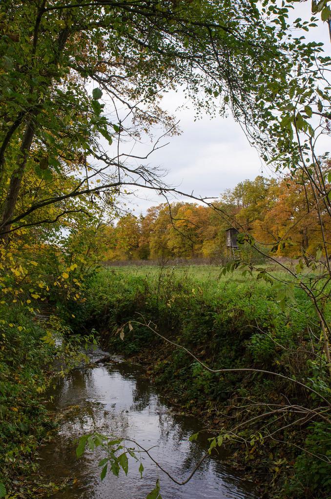 Herbst im Klingholz, beim Rodenbach