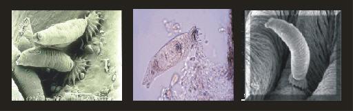 Bron: foto 1: K, Ogawa, -foto 2: cascadekoi.com, -foto 3: koiandponds.com