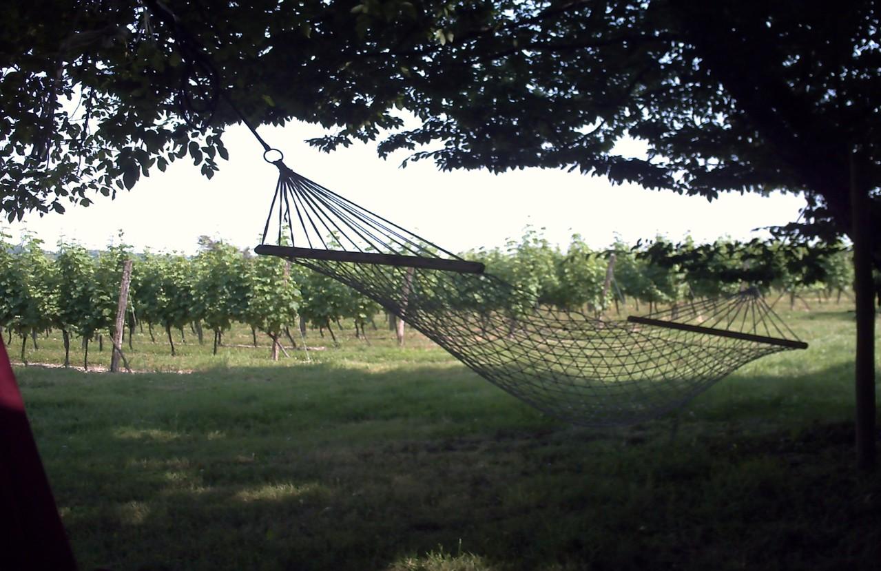 Sieste au pied de la vigne