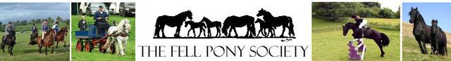 FPS  Studbook Anglais des poneys Fell (Fell Pony Society)