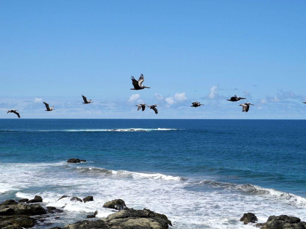 Pelikane vor Casas Pelicano