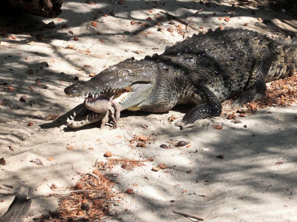 Ovidios Krokodil