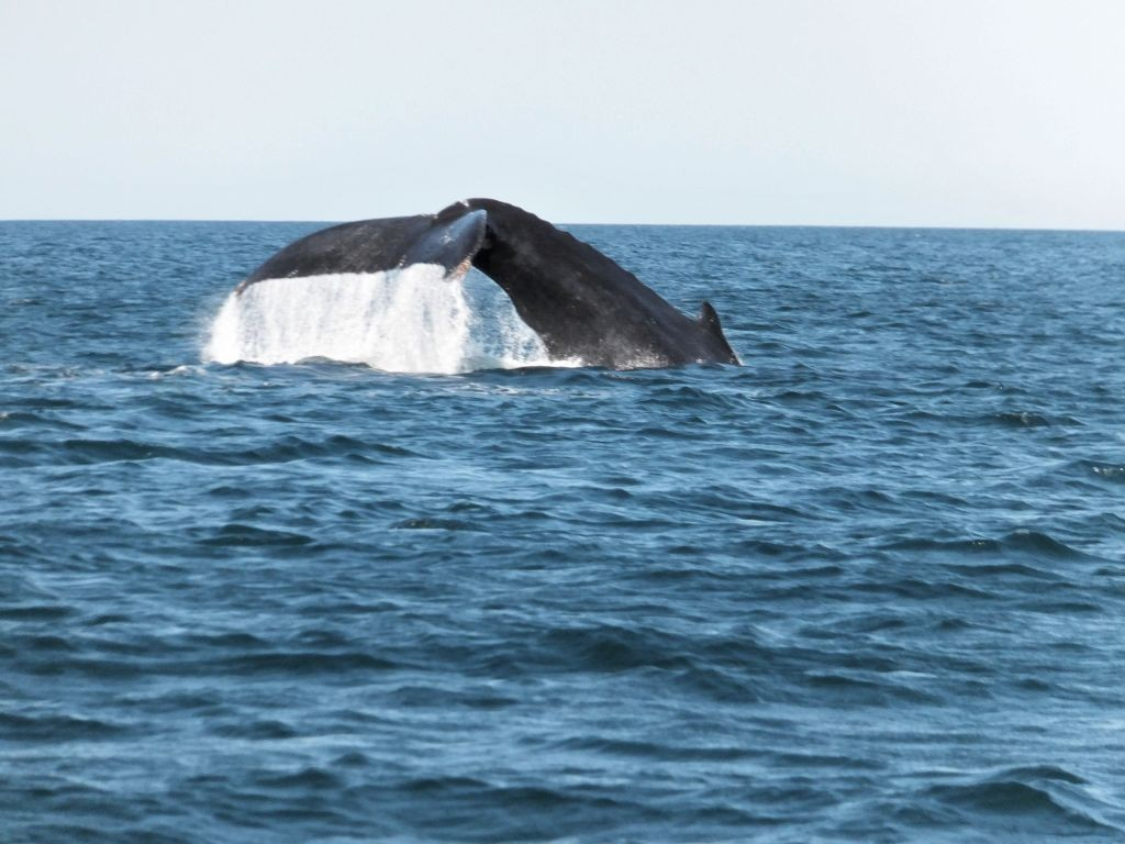 Wal vor Playa Junquillal