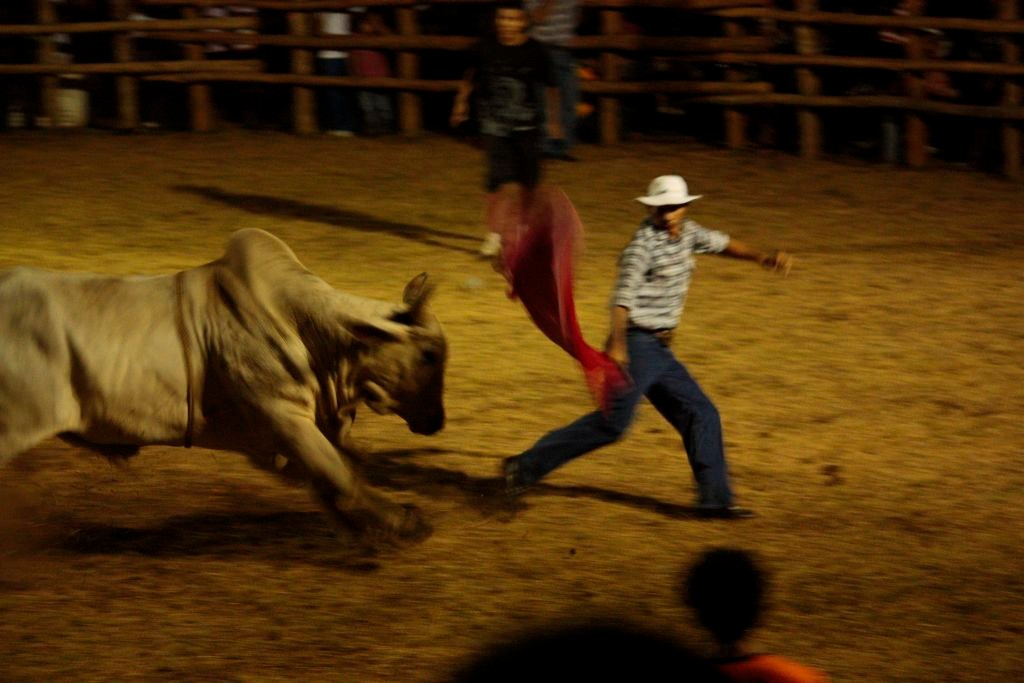 Fiesta-Stierreiten