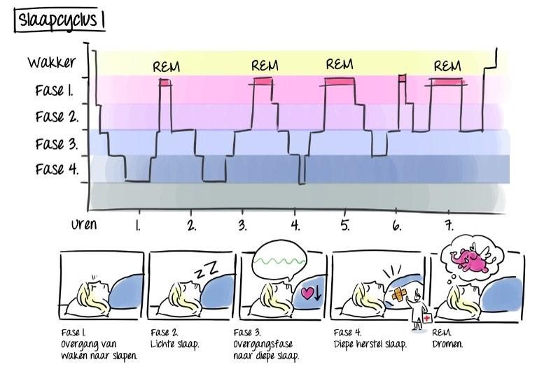 Normale slaap