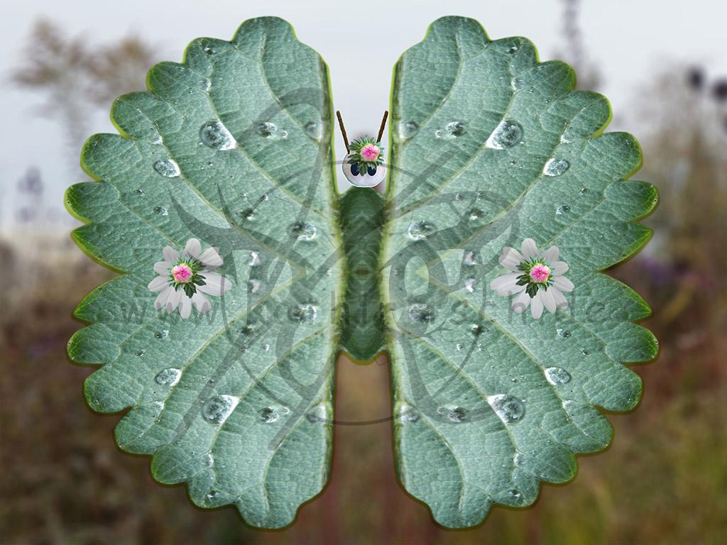 Skurriler Schmetterling