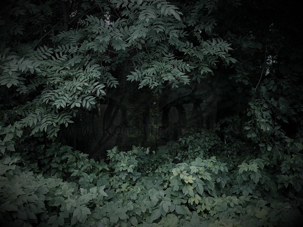 Das Auge des Waldes