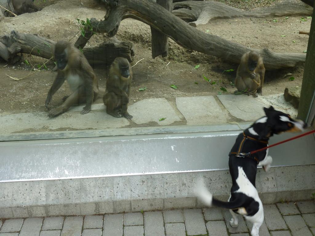 so'ne Affenbande
