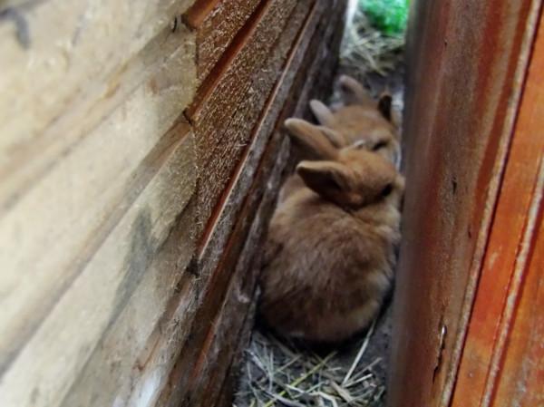 Ein gutes Versteck, hintern Hochstall