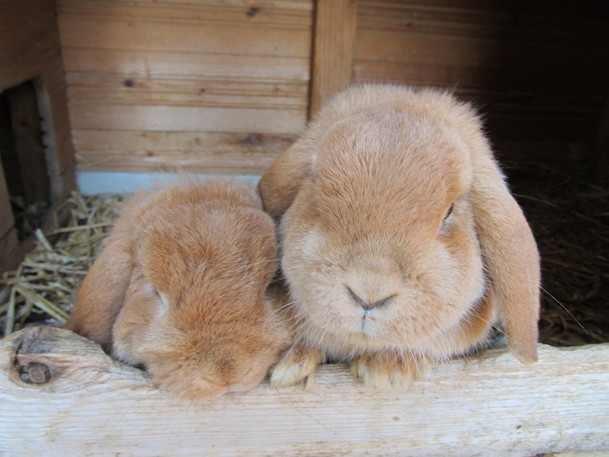 Bonny und Clyde