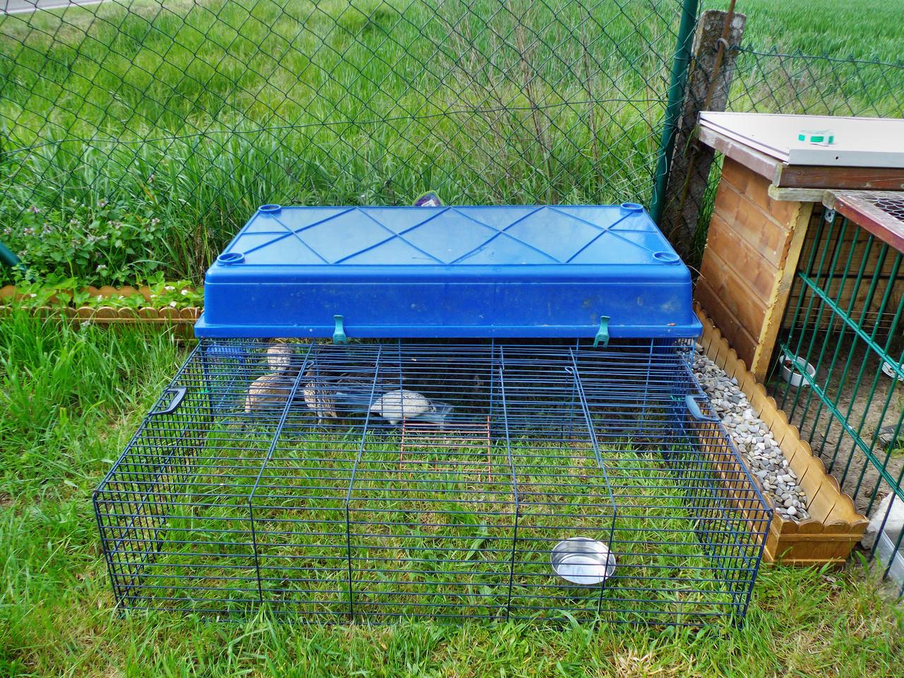 das vorrübergehende Gehege... aus Kaninchenställen zusammen gestellt.