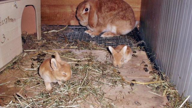 Clyde und 2 von 4 Jungtieren