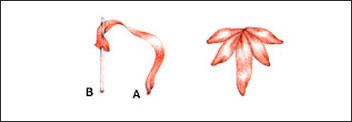 ОСНОВНЫЕ СТЕЖКИ  используемые в вышивке лентами