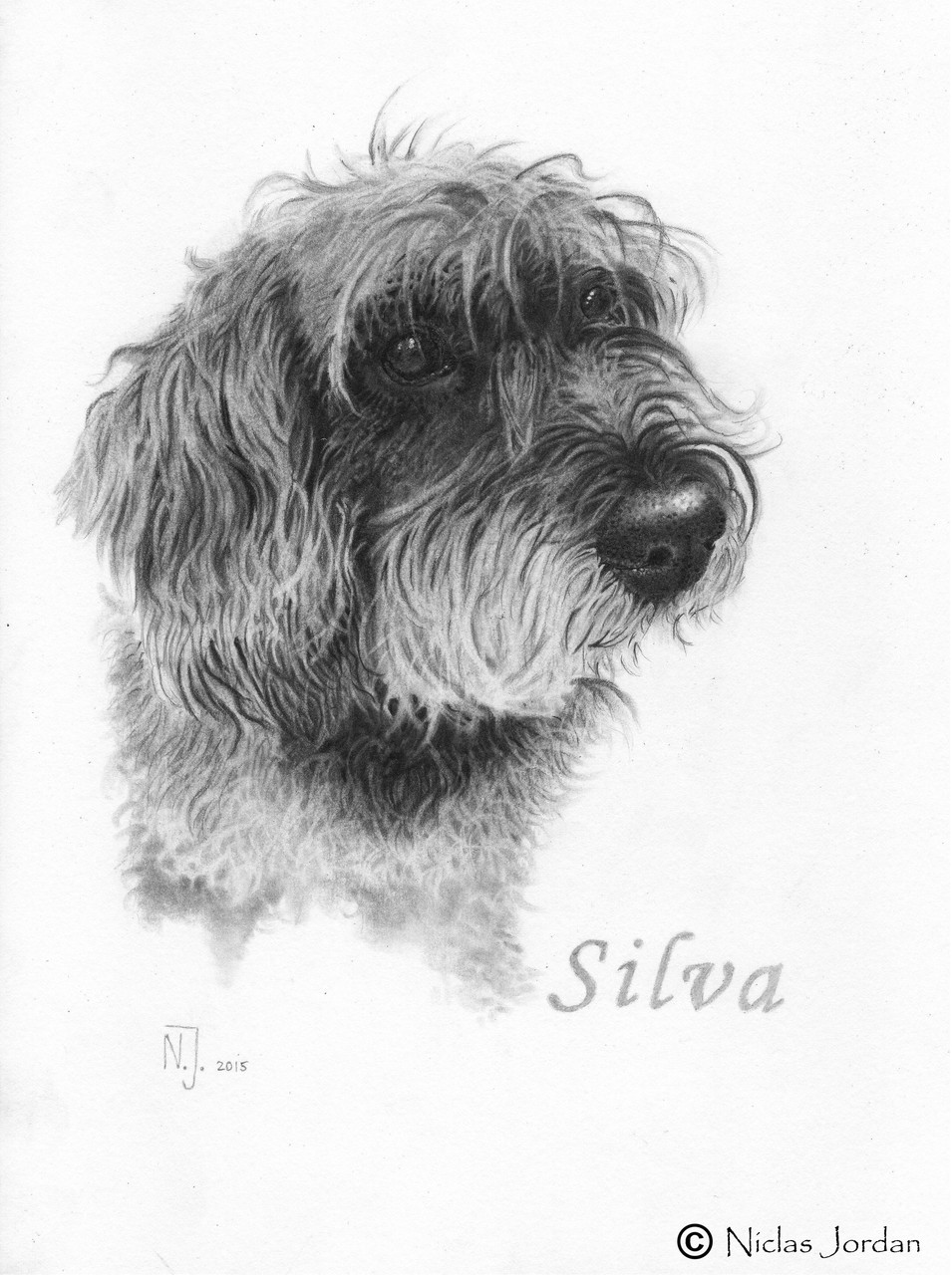 """Rauhaardackel Silva"" 2015"