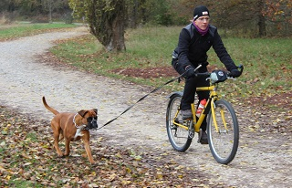 Ausdauerprüfung Fahrrad Velo mit Hund Qsmilla