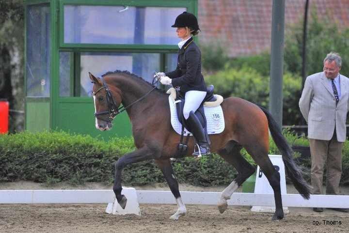 Hengst v.FS Champion de Luxe-Domingo verkauft nach Dänemark.