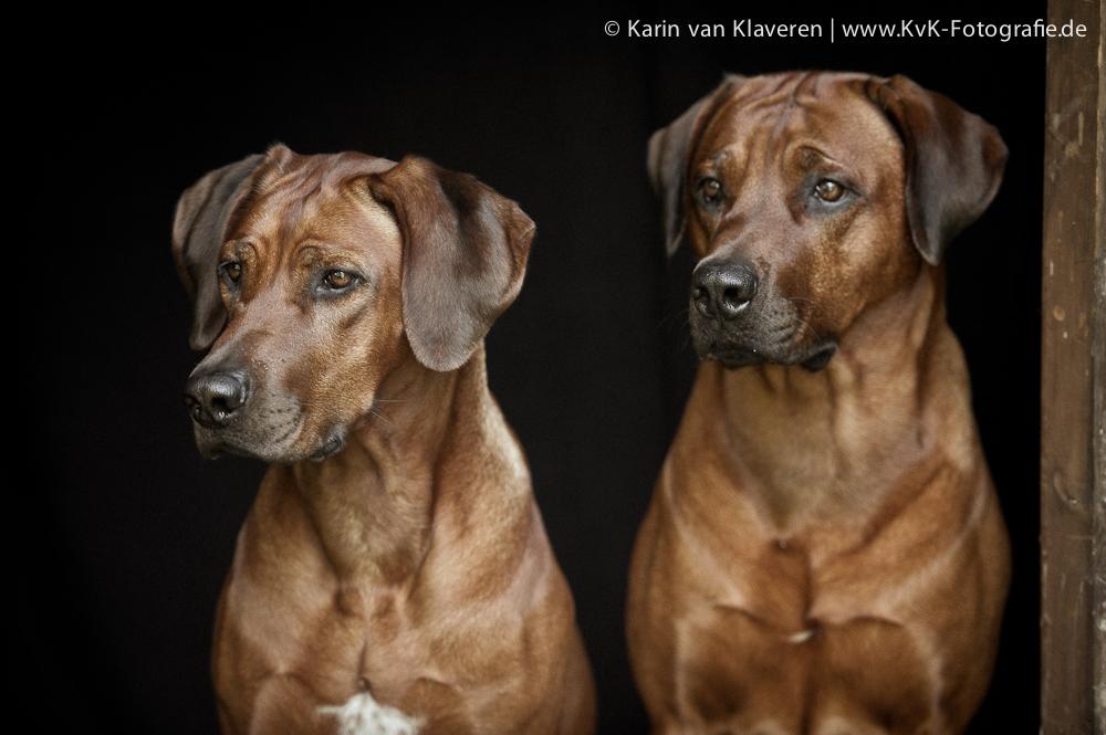 Duke und Nayla