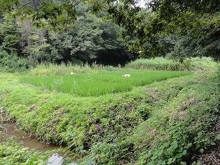 上の田の除草。3人、1時間半で完了。