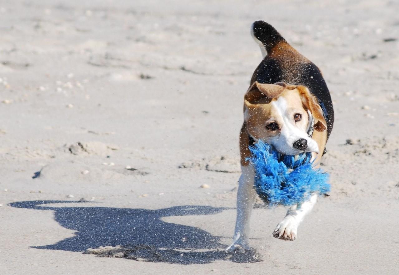 Doro gibt am Strand alles was geht