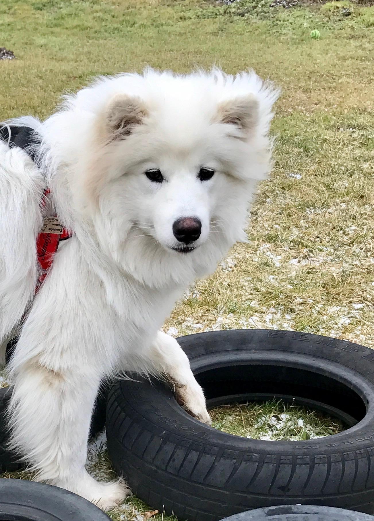 Tamilo erkundet die Reifen