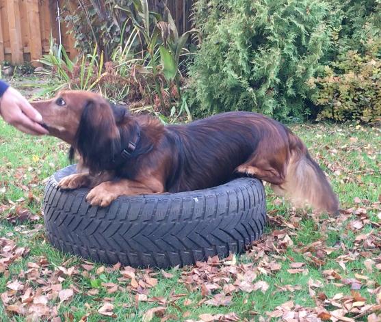 Asko legt sich auf den Reifen