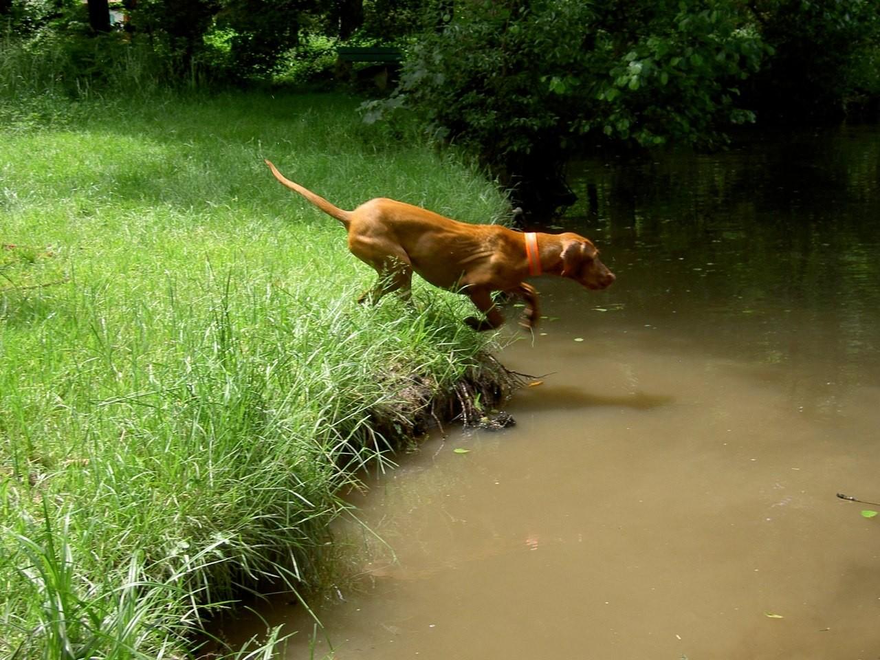 Aron beim Sprung