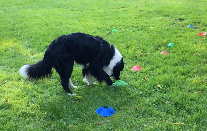 Rufus findet die versteckten Leckerchen