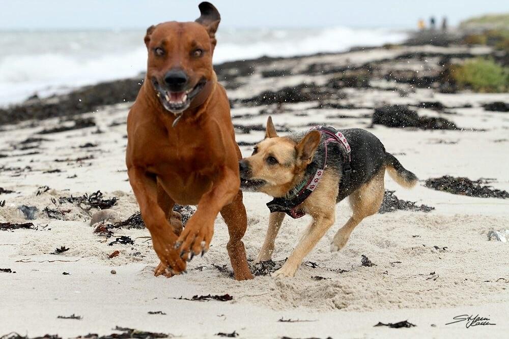 Shanti jagt ihren Freund in die Flucht