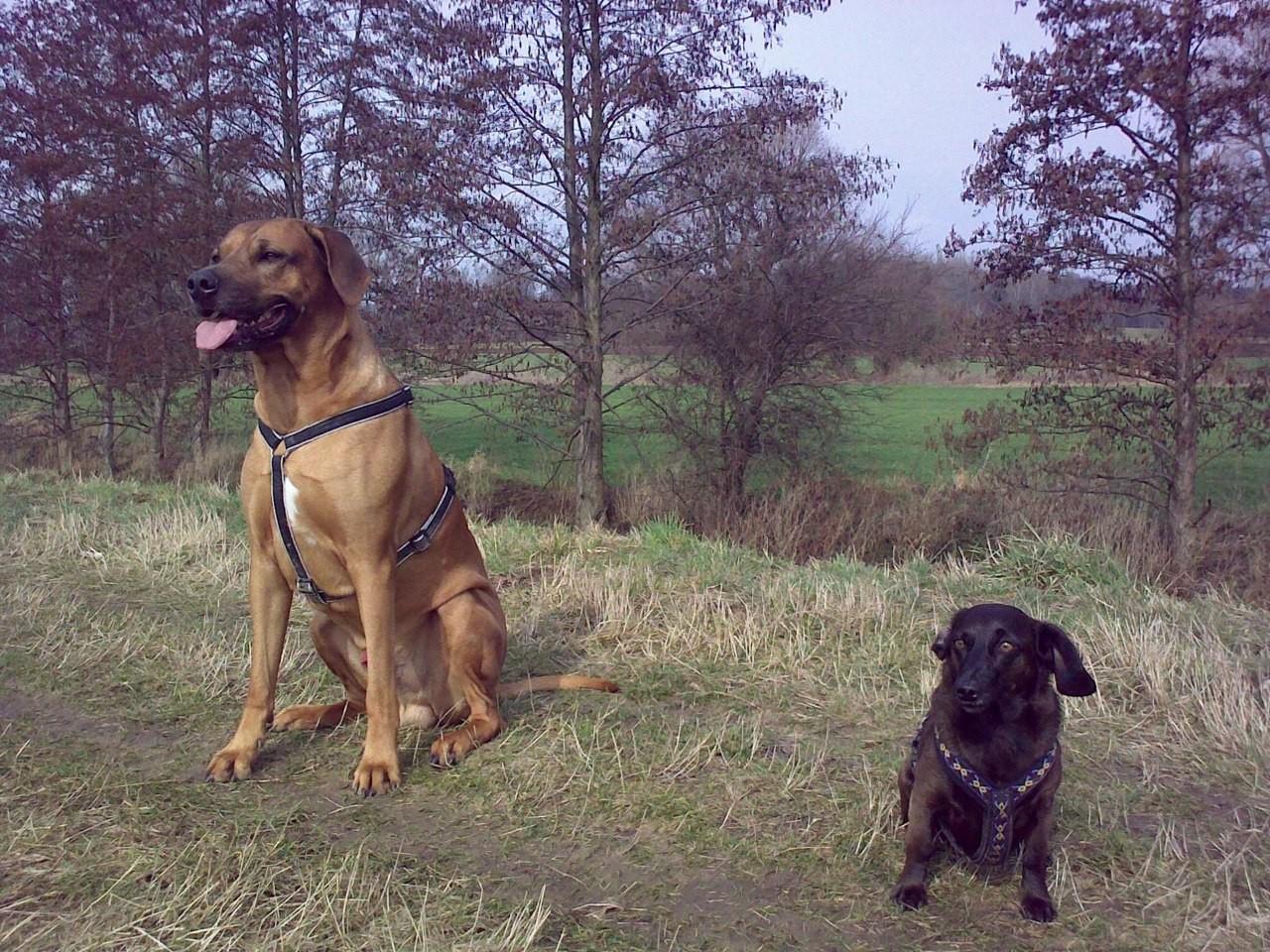 der große und die kleine Braune :-)