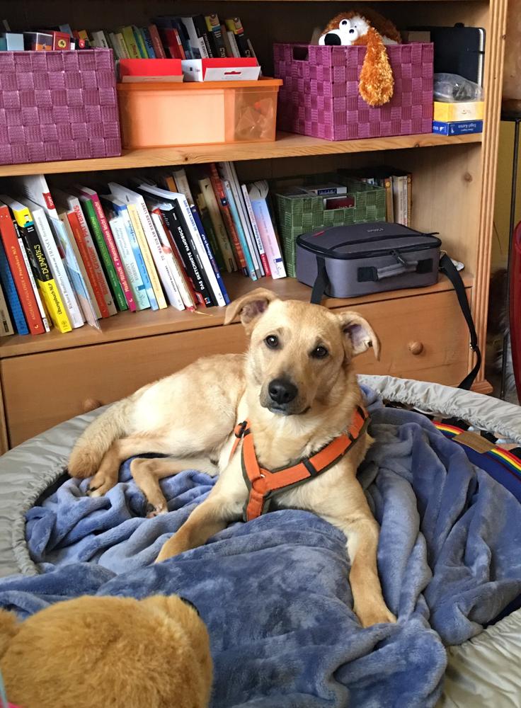 Sammy ganz entspannt auf meinem Trampolin