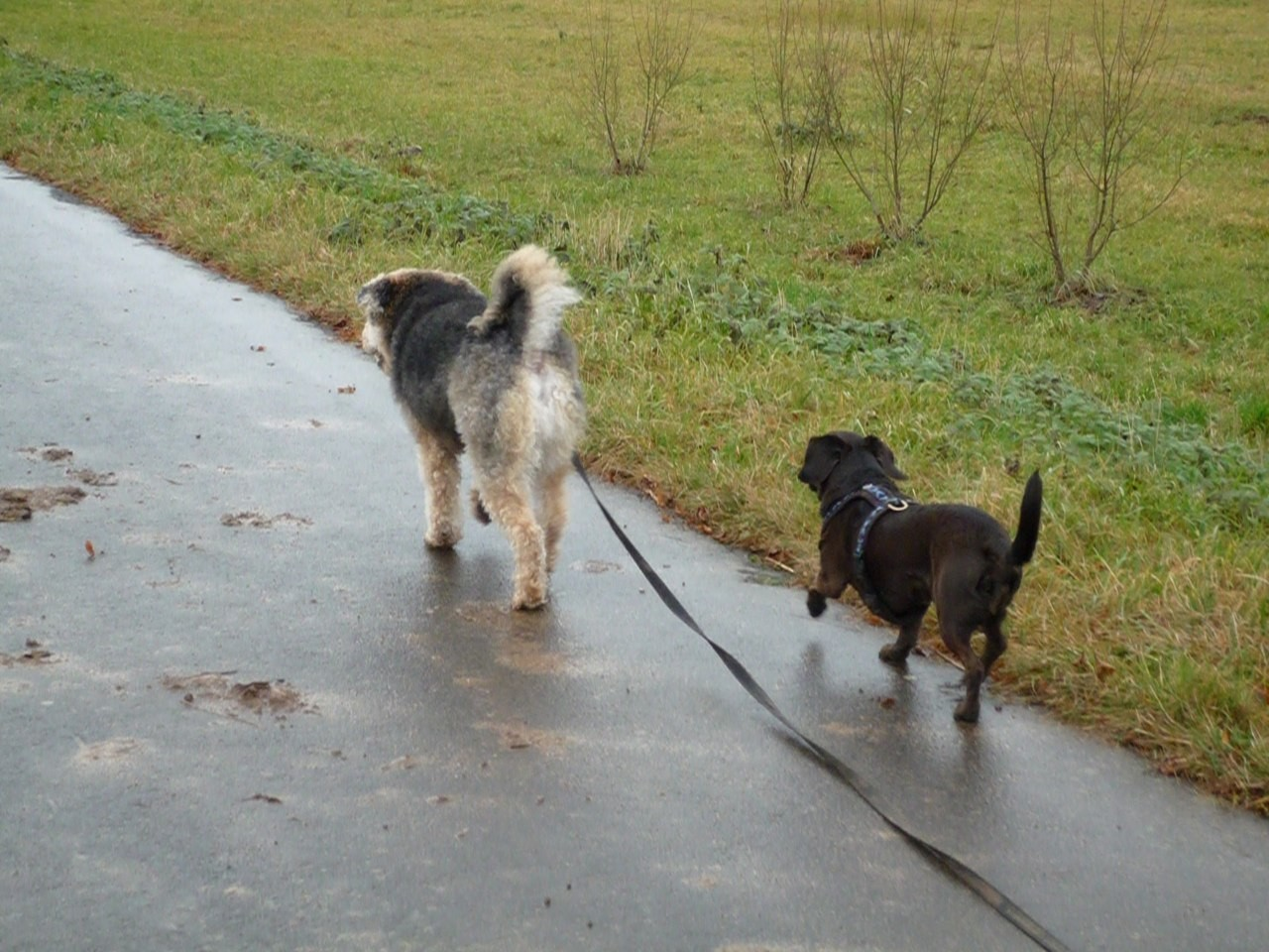 we are walking - Saba und Ludwig