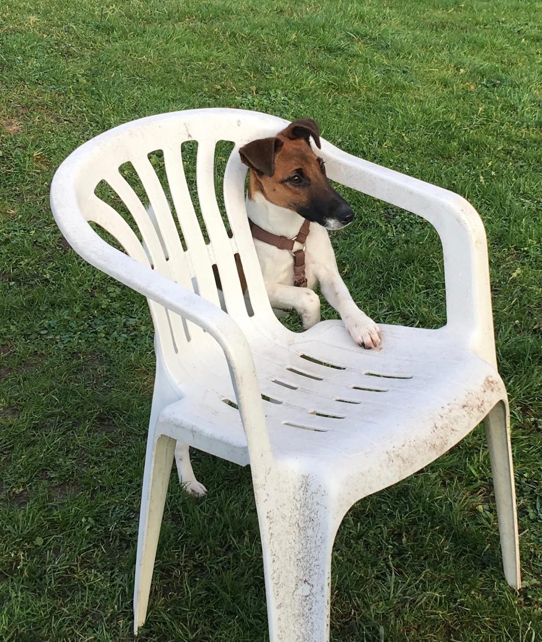 Quitte probiert den Stuhl aus