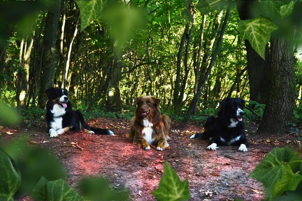 Cleo mit ihren Mädels Arija und Java