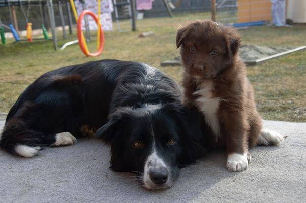 Mama Java und Duke