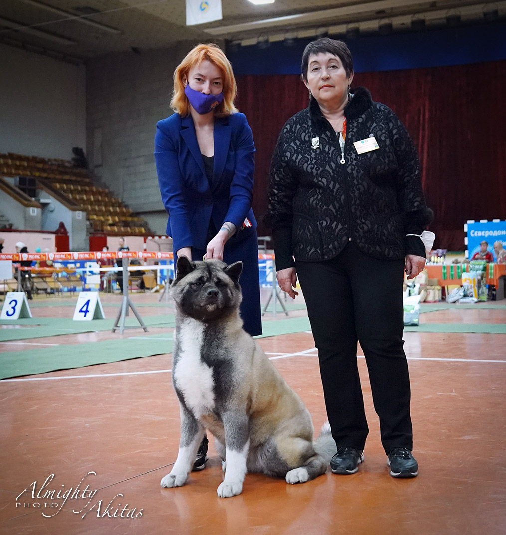 American Akita Breed National Dog Show in Severodonetsk, UKRAINE, 07.03.21