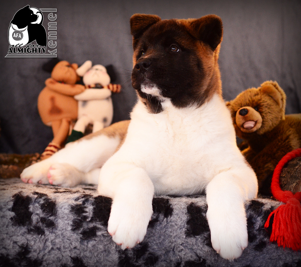 #nationaldogshow #internationaldogshow #interchampion #CIB #champion #almightydog #cac #cacib #superdog #superpuppy #findpuppy #searchbestpuppy #kingakita #loveakita #bestakitaukraine #bestakitaukraine #bestdogakita #ilovemyakita #ilovemydo