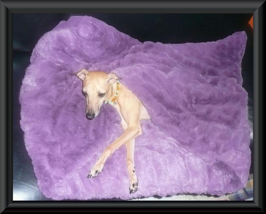 Preis: 79,00 / Kuschelhöhle in Nerzoptik (90 cm x 70 cm) zartes Lila ~~präsentiert von der kleinen Cinderella vom Palast der Winde~~