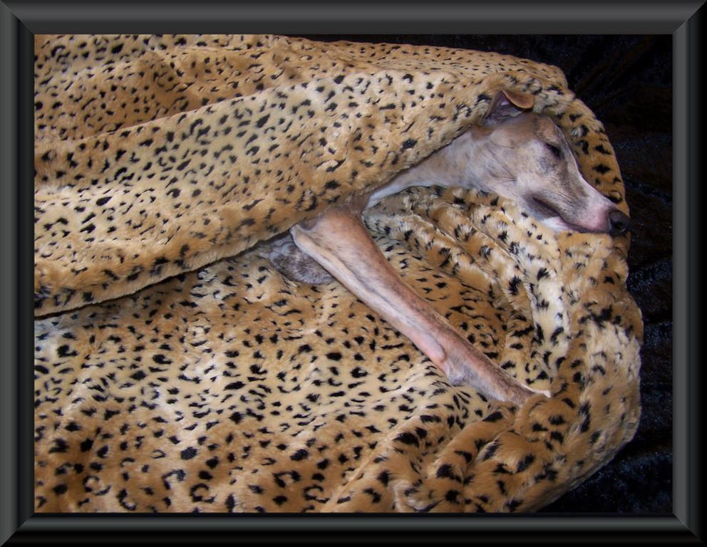 Kuschelhöhle im Leoparden-Design 90 cm x 70 cm