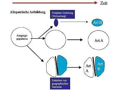 (Storch,Welsch,Wink;2007;S.288;Evolutionsbiologie)
