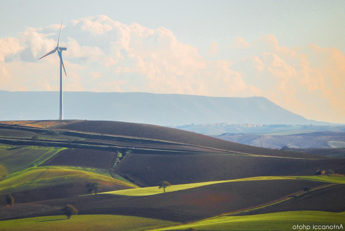 colline coltivate a grano e il Gargano sullo sfondo
