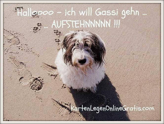 Hunde Lustiger Spruch Mit Bild Motivation Kartenlegen Online Gratis