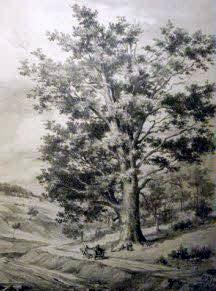 Eiche um 1899, Lithografie von Albert Hartmann